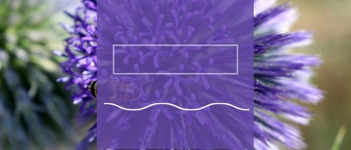 מרימים בסגול